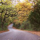 Fall colors on a back road. by Theshinyavenger