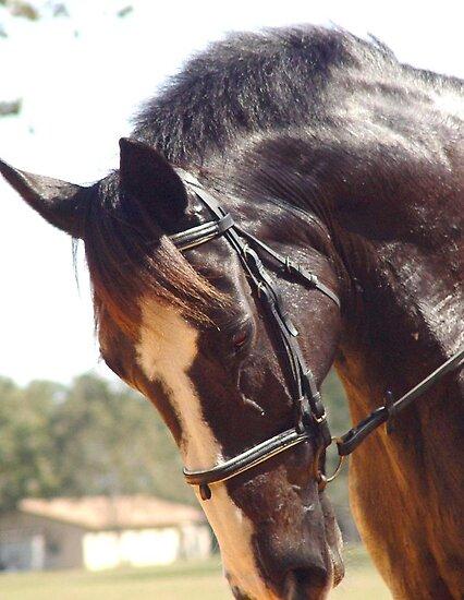 Elodie's Horse by May Lattanzio