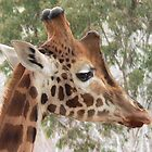 Mr Giraffe by Peter Chown