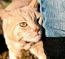 cat snuggling up to mums leg by eagleyeimages