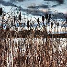Lake Ginninderra Reeds by Bluesoul Photography