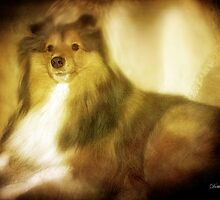 Shetland Sheepdog by DottieDees