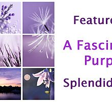 CLICK-2-view-ALL_banner 4 a fascinating purple by Aimelle