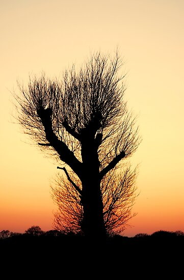 """""""THE HAIRY WAVING TREE"""" by snapitnc"""