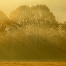Golden Rays by Gary L   Suddath