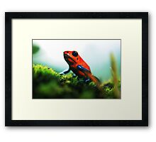 Strawberry Poison-Dart Frog Framed Print