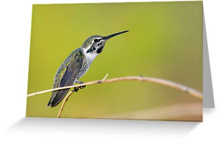 Hummer Stretch by Daniel J. McCauley IV