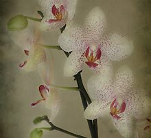 My Orchids by Sandra Cockayne