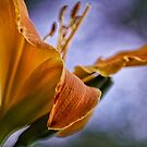Lily Abstract by Dianne English