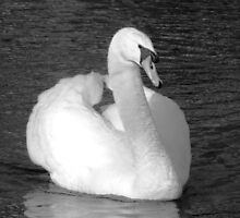 Swansong by Graham Povey