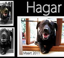 Our dog Hagar, the Labrador by Elizabeth Kendall