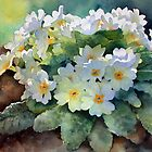 Ann Mortimer&#x27;s Watercolour Flowers by Ann Mortimer