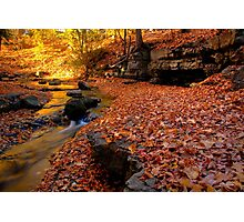Falling Brook Photographic Print