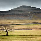 Ingleborough & The White Scar Shelf by SteveMG