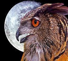 Full moon hunter by ©  Paul W. Faust