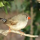 the other half, a female finch  by Liza Barlow