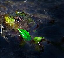 Kermit at Mer Bleue by Benjamin Brauer