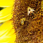 SUNFLOWER AND BEES by JOE CALLERI