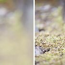 Moss Diptych by Shayna Sharp