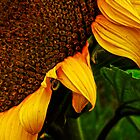 SUNFLOWER 02. by JOE CALLERI