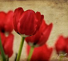tulipes rouges by janetlee