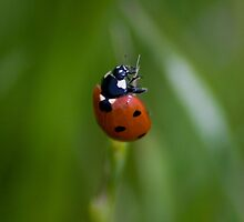 Lady Bug by Brian Leadingham