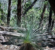 Grass Tree by garts