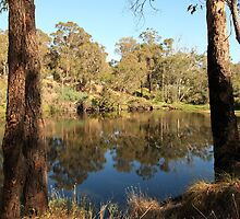 Blackwood River #3, Bridgetown, Western Australia by Elaine Teague