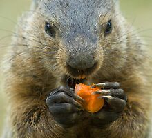 """I LOVE my carrots!"" by ©  Paul W. Faust"