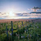 Camas Prairie Wildlife Refuge by Leland Howard