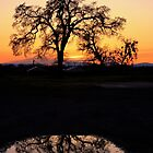 Valley Oak by Gregg Le Blanc