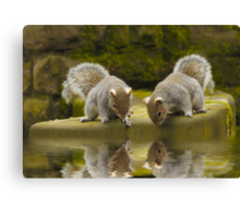 Double reflections Canvas Print