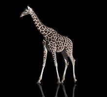 giraffe by paulinchen