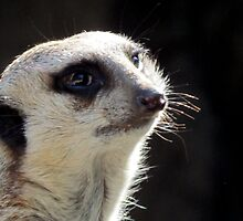 I Hope I Get the Part in the Meerkat Mansions! by Bunny Clarke