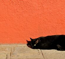 Black Cat Red Wall by Tiffany Dryburgh