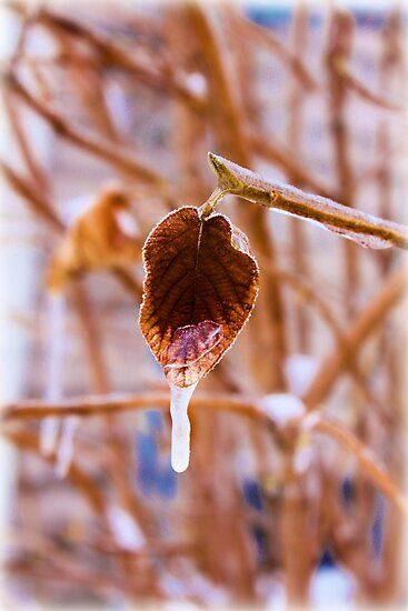 Frozen Leaf by Carrie Bonham