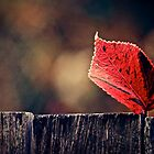 Red Autumn Leaf by Stevewhite