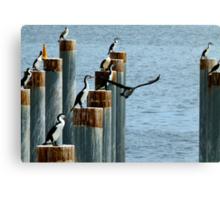 cormorants convention Canvas Print