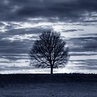 Tree of Solitude by Bluesoul Photography