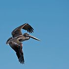 Juvenile Pelican Flight by Joe Jennelle