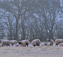 Lambs Frosty Breakfast by James  Key