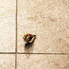 The Beggar Bird by Christy Hoffman