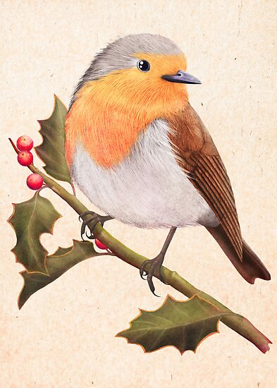 a robin on a holly berry tree by bymuravka