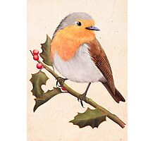 a robin on a holly berry tree Photographic Print