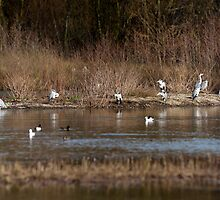 Heronry Panorama by TheNug