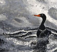 black duck swimming  by john  garcia