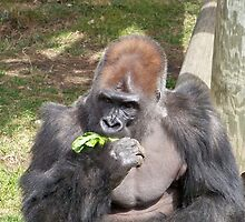 Gorilla Eating Lettuce by Nora Caswell