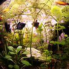 FishGlobe by RosiLorz