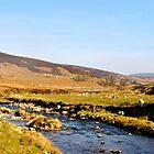 Grampian Mountains by Larissa  White Edwards