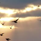 Let every part of your soul fly free.... by greenstone